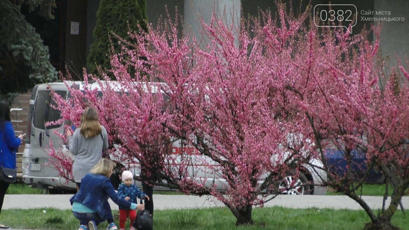 Ти ще не тут? У центрі Хмельницького розцвіли сакури (фото), фото-9