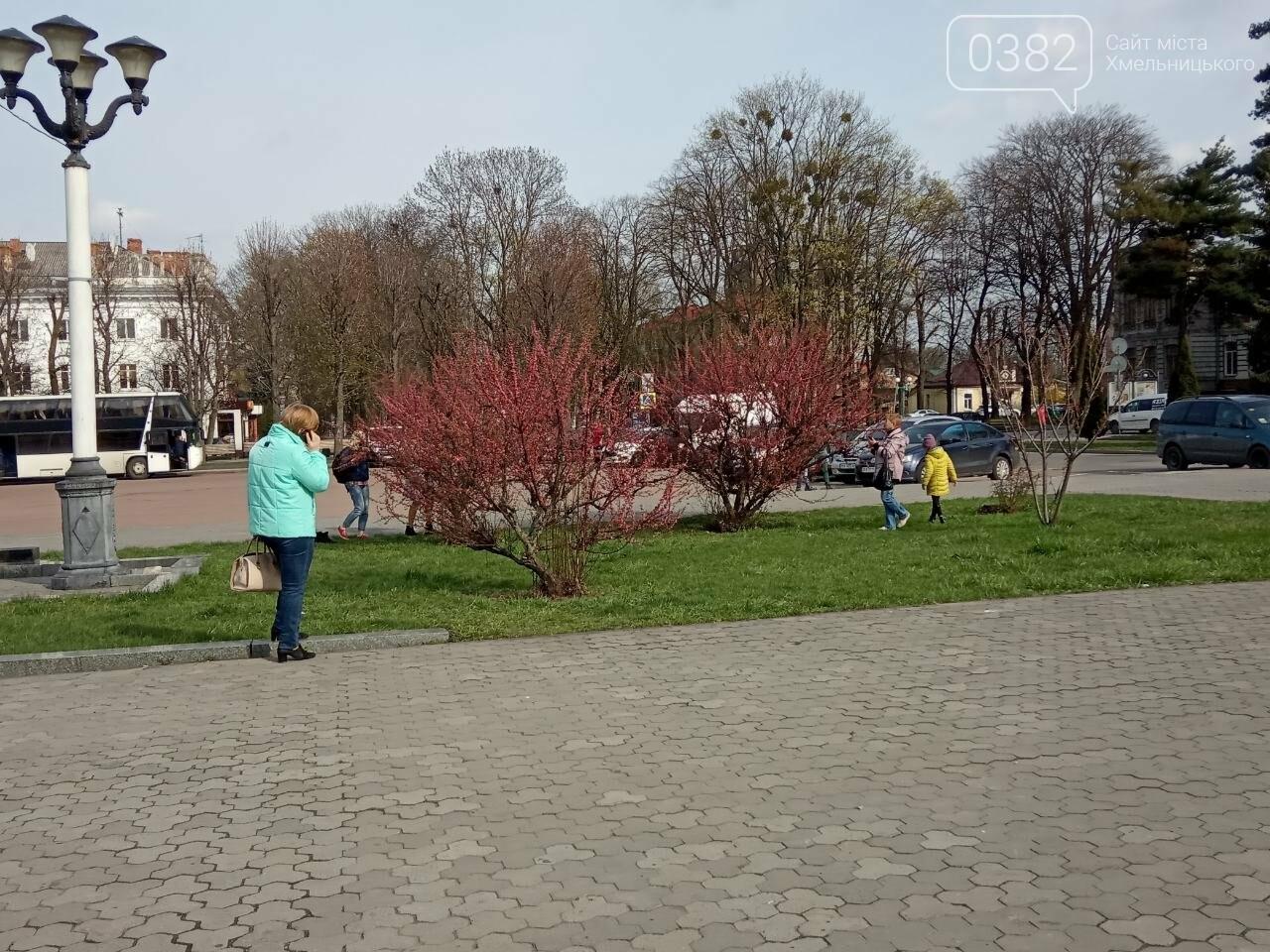 Ти ще не тут? У центрі Хмельницького розцвіли сакури (фото), фото-1