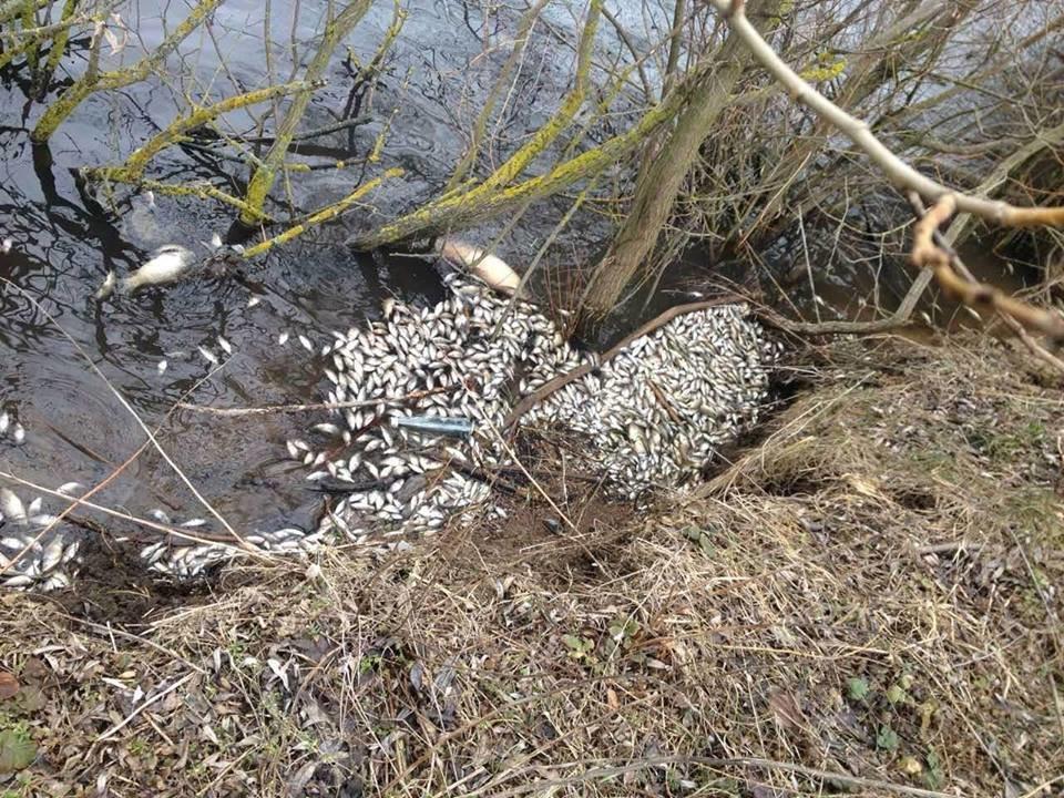 У річці на Хмельниччині масово загинула риба. ФОТО, фото-5