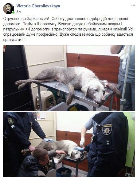 Голос соцмереж: на Зарічанській отруїли собаку, фото-1