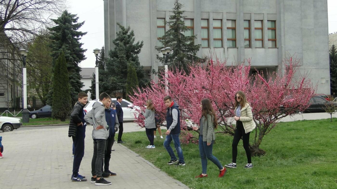 У центрі Хмельницького розцвіли сакури. ФОТО, фото-2