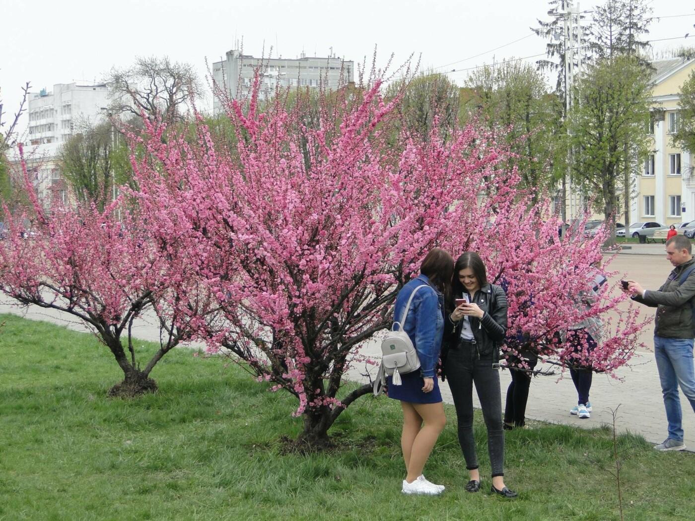 У центрі Хмельницького розцвіли сакури. ФОТО, фото-4