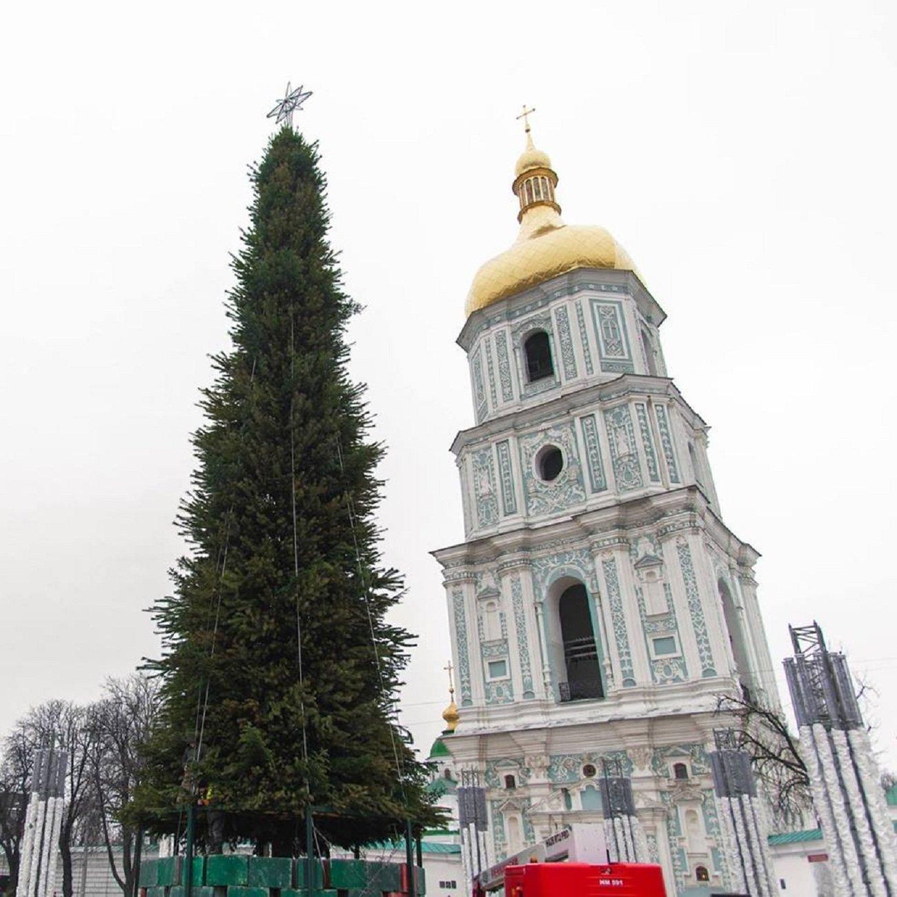Найбільша подільська красуня з'явилась у столиці. ФОТО, фото-2