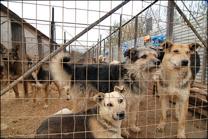 У Хмельницькому безпритульних собак візьмуть на облік, фото-1