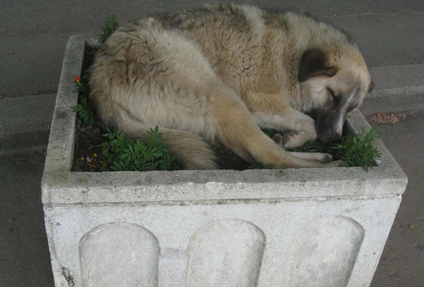 У Хмельницькому безпритульних собак візьмуть на облік, фото-2