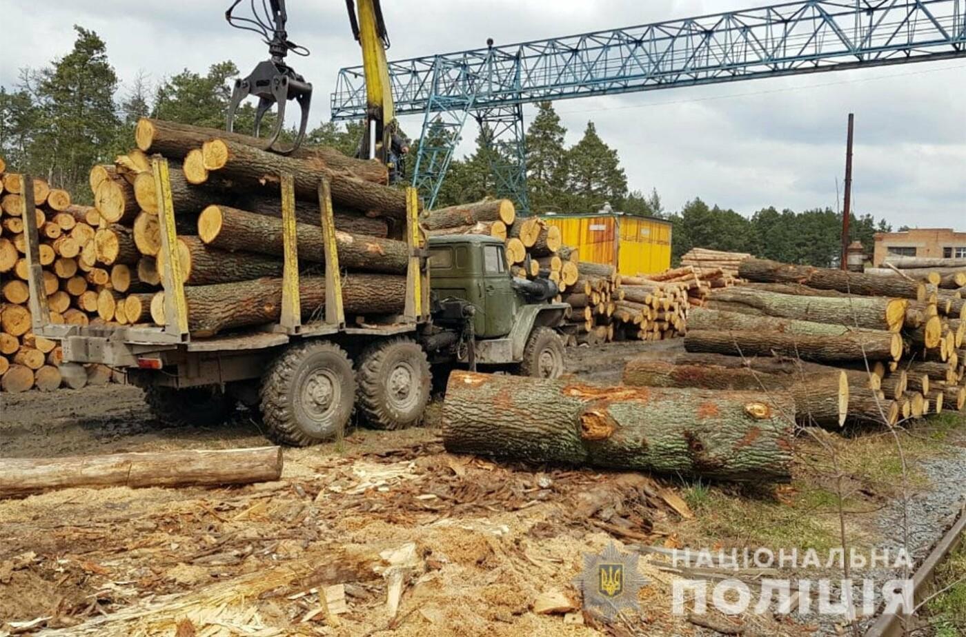На Хмельниччині посадовці лісгоспу розкрадали ліс, фото-1