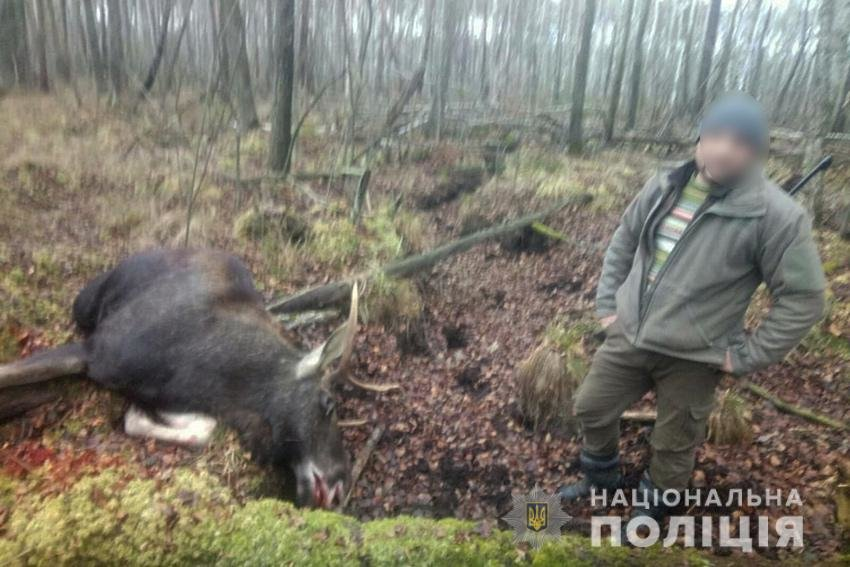 На Хмельниччині вбили червонокнижну тварину (фото 18+), фото-1