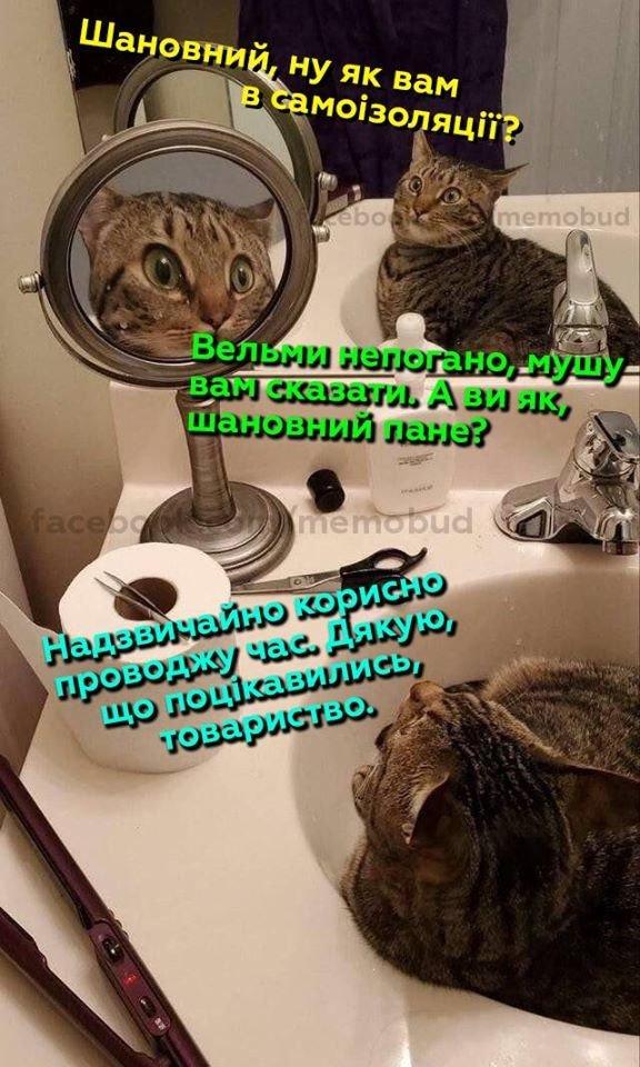 Хмельничани продовжують поширювати смішні меми про карантин та коронавірус, фото-5