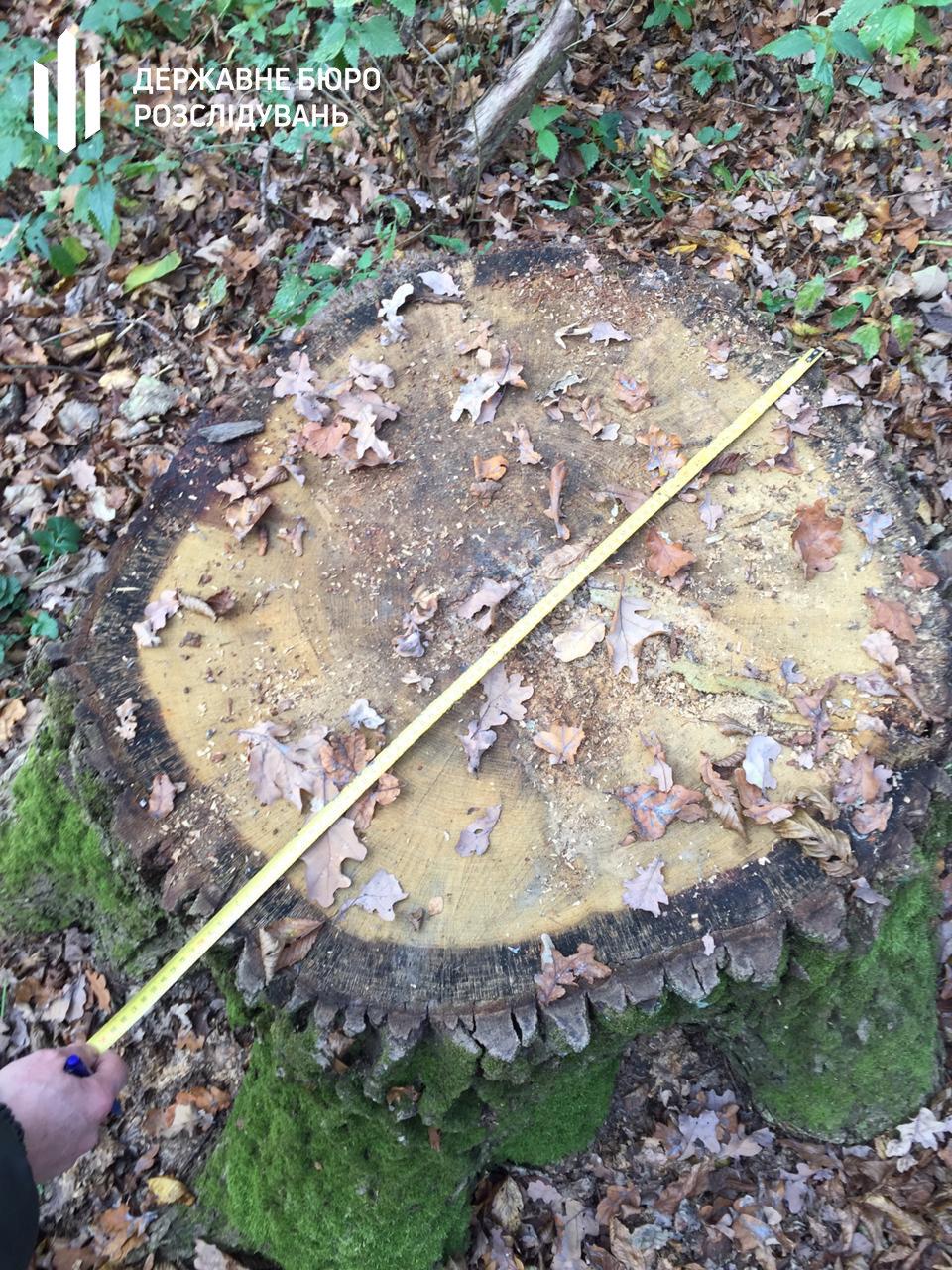 Незаконна вирубка лісу – ДБР повідомило про підозру керівнику одного із лісових господарств, фото-2