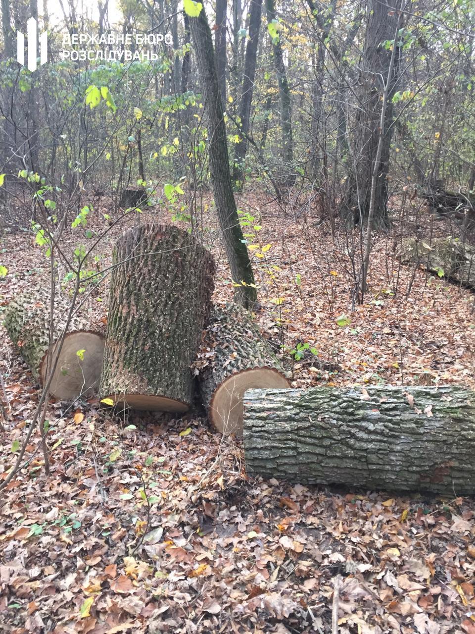 Незаконна вирубка лісу – ДБР повідомило про підозру керівнику одного із лісових господарств, фото-1