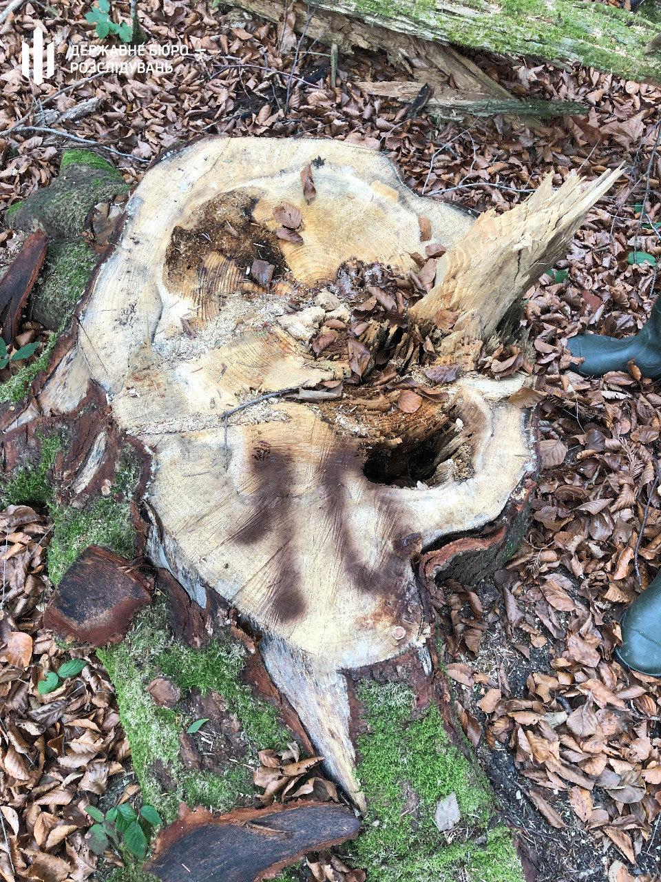 Понад 2 мільйони гривень збитків – ДБР у Хмельницькому повідомило про підозру майстру лісу, фото-3