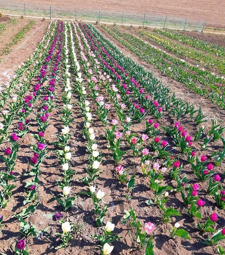 На Хмельниччині з'явилася квіткова долина (фото), фото-5