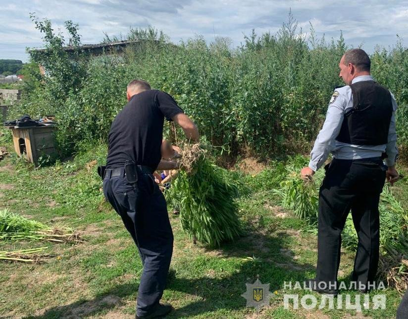 На Хмельниччині поліцейські виявили у 42-річного чоловіка 176 кущів конопель , фото-1