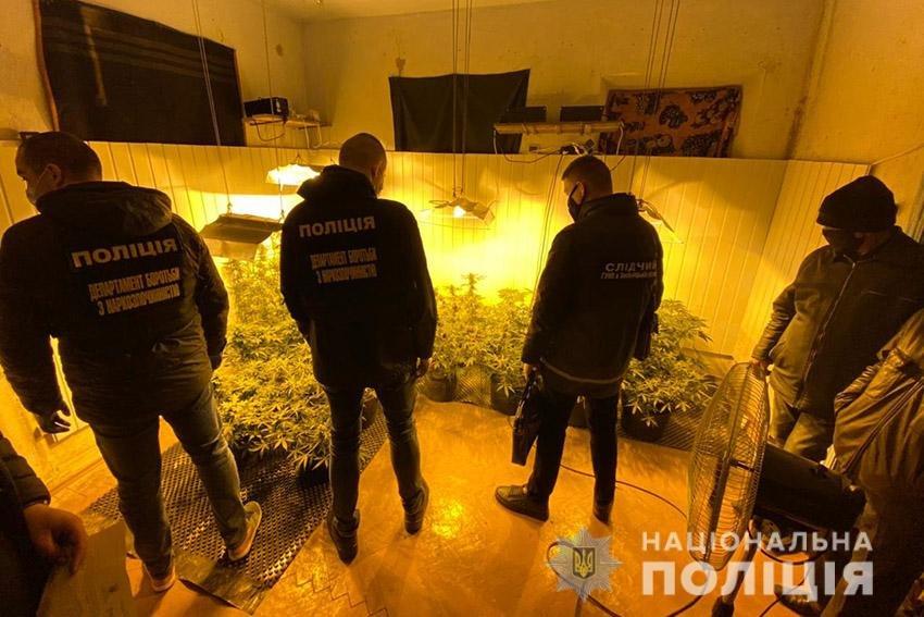 На Хмельниччині працівники поліції викрили наркоділка, який вирощував елітну коноплю , фото-1