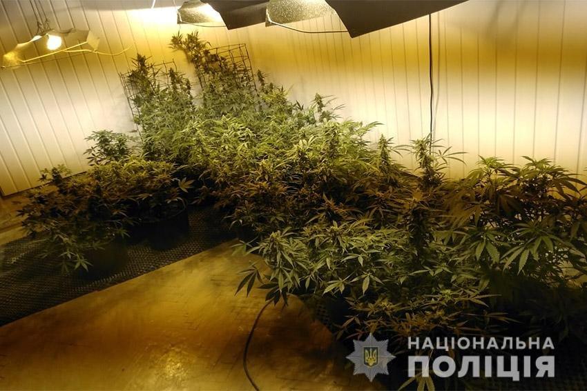 На Хмельниччині працівники поліції викрили наркоділка, який вирощував елітну коноплю , фото-2