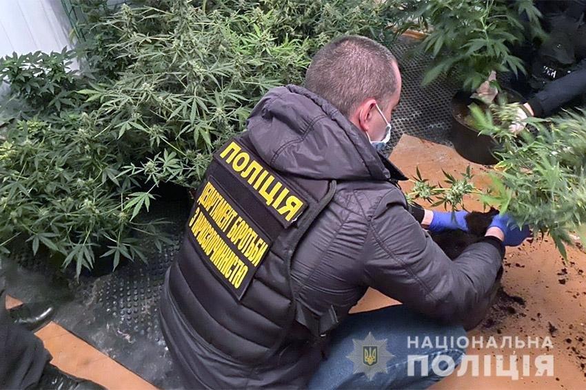 На Хмельниччині працівники поліції викрили наркоділка, який вирощував елітну коноплю , фото-3
